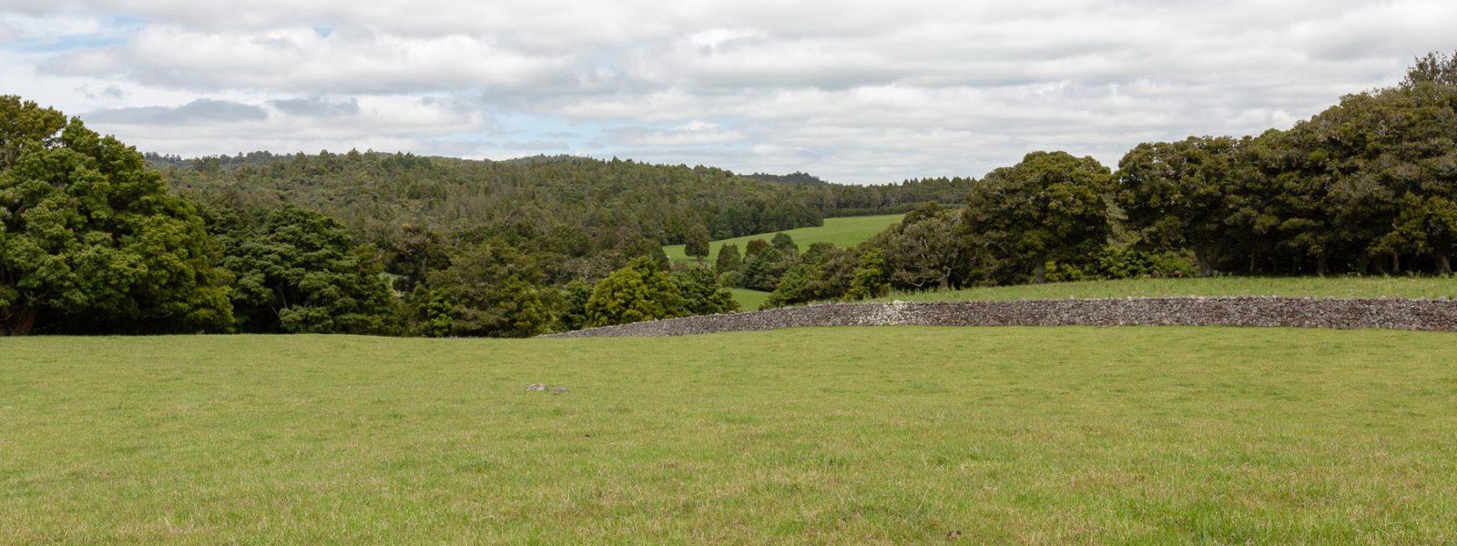 Stoney Hill - Header Image